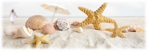 Seashells and Starfish_sm